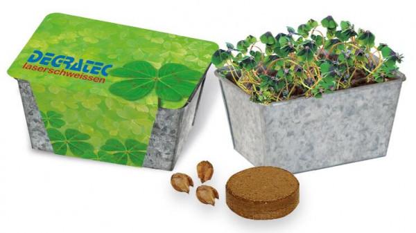 Glücks-Kästchen, Glückskleezwiebelchen, 1-4 c Digitaldruck inklusive