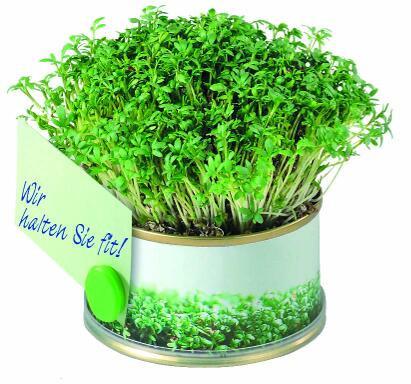 Mini Garten Vitamine mit Magnet, Ø 73 x 38 mm, Kresse, 1-4 c Digitaldruck inklusive