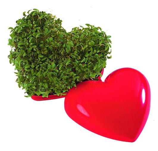 Ein gesundes Herz, Kresse - Werbeaufdruck: Tampondruck