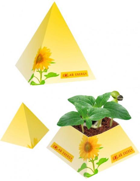 Wachstums-Pyramide, Zwergsonnenblume, 1-4 c Digitaldruck inklusive