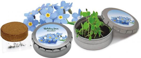 Pflanzdöschen Vergiss-mein-nicht, Vergissmeinnicht, 1-4 c Digitaldruck inklusive